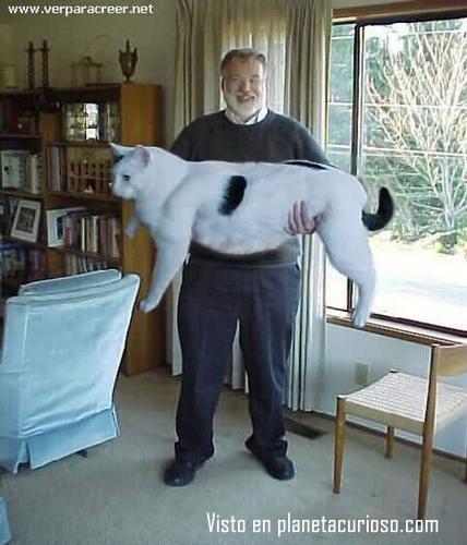 4987000el-gato-mas-grande-del-mundo