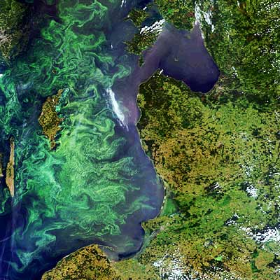 Fitoplancton visto desde el espacio