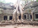 angkor-wat-cambodia-ta-prohm-red-betty-black-best-picture-gallery
