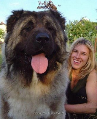 Biggest_dogs