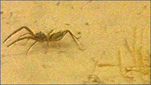 camel_spider_2