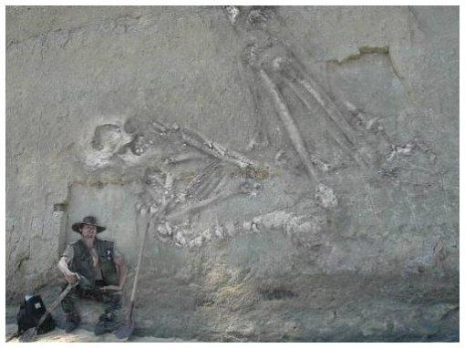 esqueleto315220f9ps2