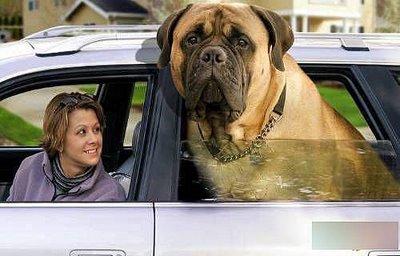 fat_dog3