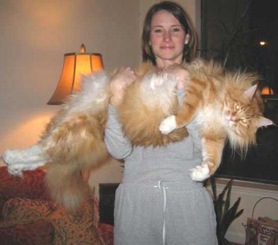 Grandes Mascotas - Perros y Gatos