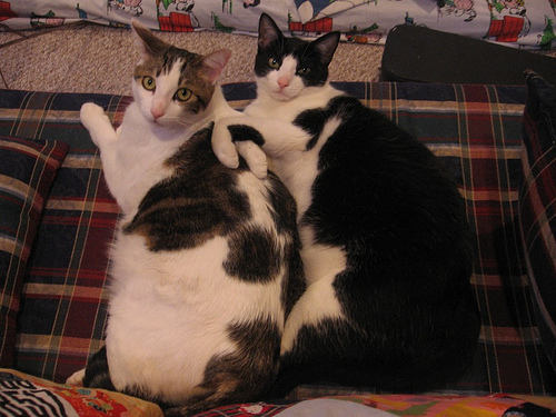 giant_cats