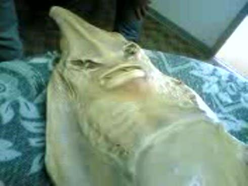 presunta-sirena-arabe-verdad-o-mentira-_imagengrande1