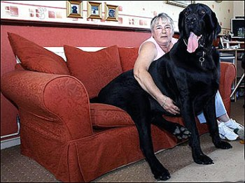 the-big-black-dog