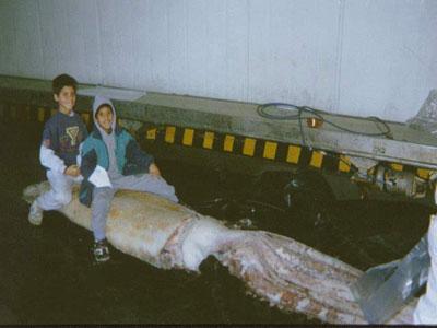 20070423185909-calamar