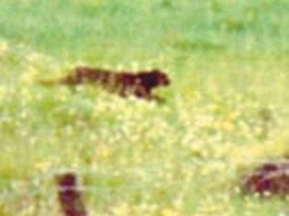 aliencats3