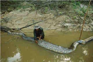 serpientes y monstruos fluviales gigantes