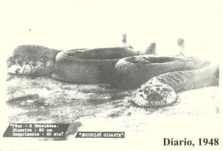 sucuriju1948
