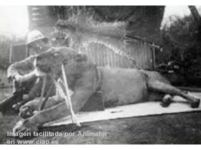 Patterson junto a uno de los leones