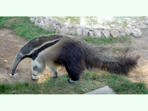 Los Animales y bichos mas feos del mundo
