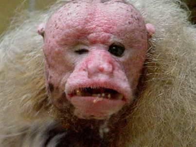 Los animales más feos, horrorosos y raros del planeta. | Tejiendo el