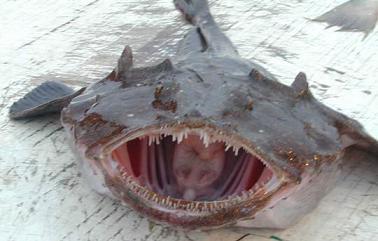 ls_ugliest_monkfish_02