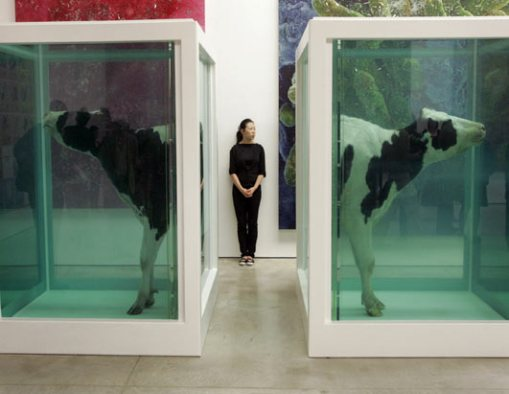 rt_cow_hirst2_070601_ssh