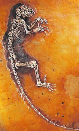 US-SCIENCE-FOSSIL-PRIMATE