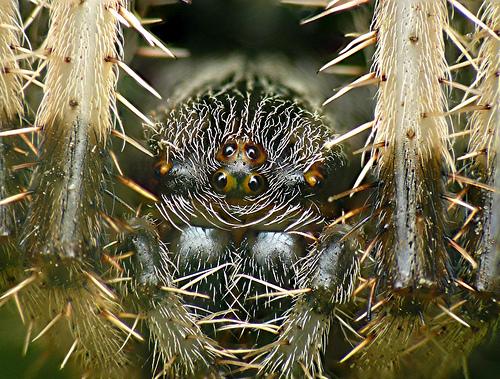 spider_eyes
