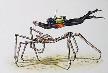 Insectos, Moluscos y Bichos Gigantes [MegaPost]