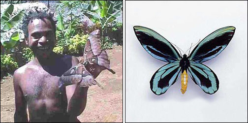 Insectos gigantes, Enormes
