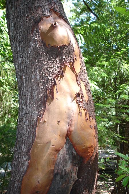 woman_tree