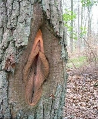 corteza de arbol vagina
