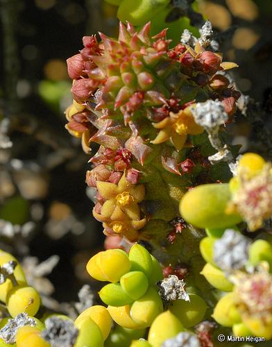 flores_del_desierto