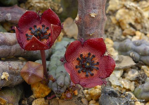 flores_del_desierto2