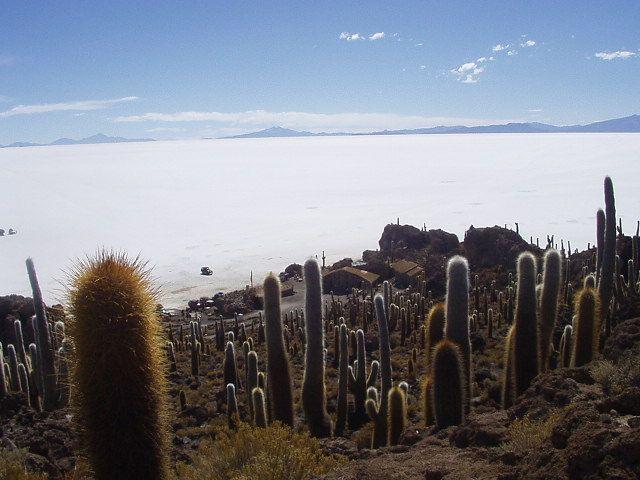 Isla_de_Pescado_Uyuni_Bolivia