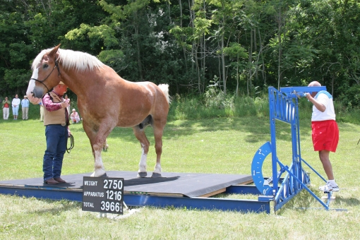 1-sri-chinmoy-lifts-radar-tallest-horse-and-handler-photoby-projjwal-pohland