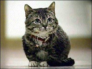 Sr.Peebles el gato mas pequeño del mundo:cat:  :cat: :cat:   El-gato-mas-pequeno-del-mundo