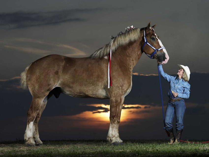 Radar-el-caballo-mas-grande-del-mundo