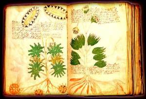 el_manuscrito_voynich_1big