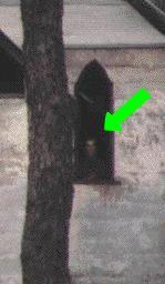 Las 100 Mejores fotos de FANTASMAS DE LA HISTORIA Segunda Partida Ghost2