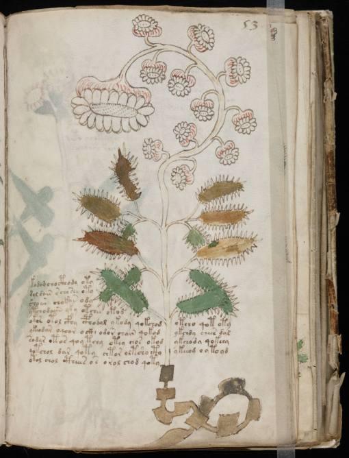 manuscrito_voynich3