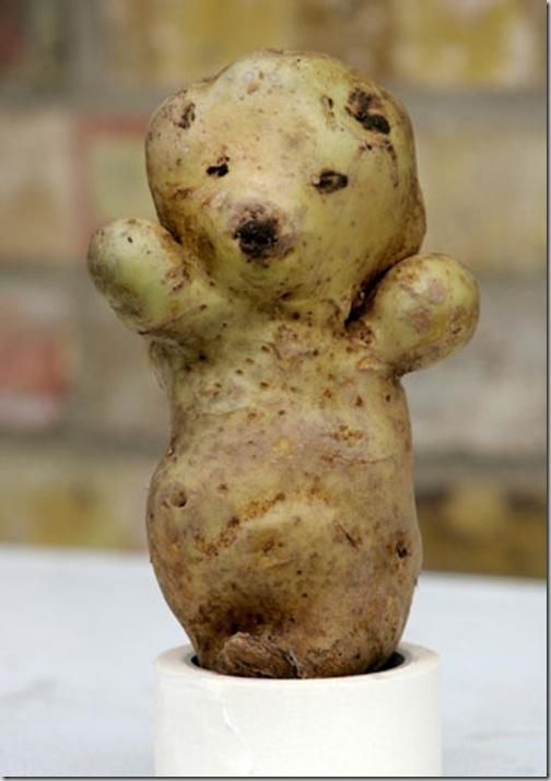 patata_oso