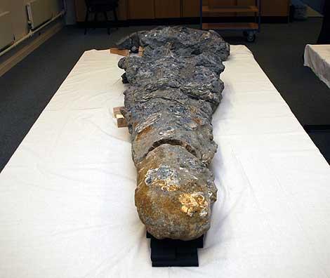 Descubren el cráneo del animal más grande de la prehistori - Ciencia ...