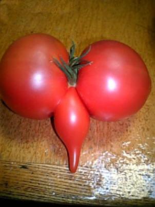 tomate-porno