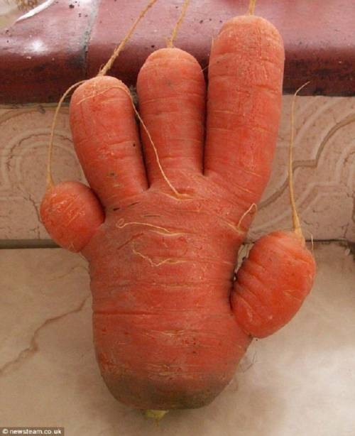 zanahoria_con_forma_de_mano_thumb