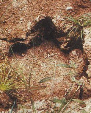El último dinosaurio del mundo aún vive: El Mokele-Mbembé