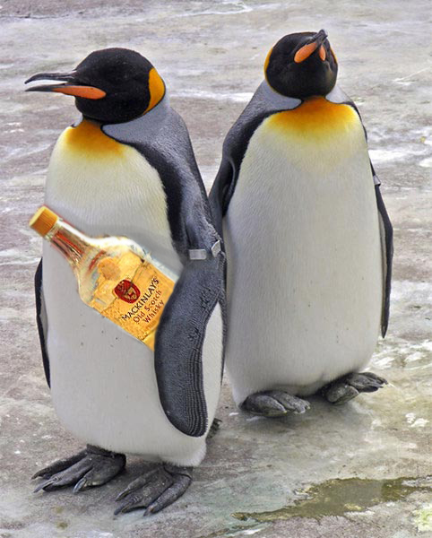 Expedición a la Antártida en busca de… ¡whisky!!