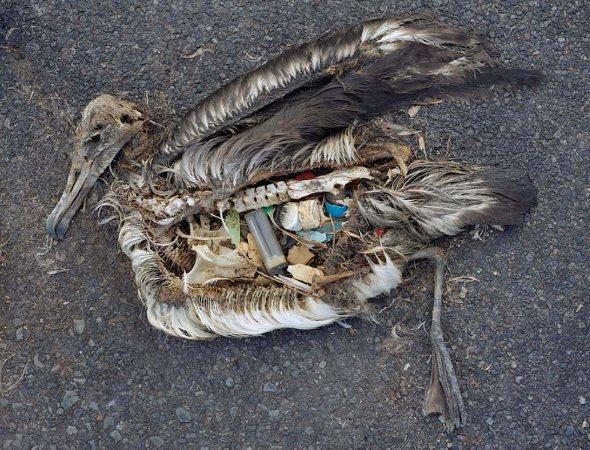 Las consecuencias de la basura en las playas