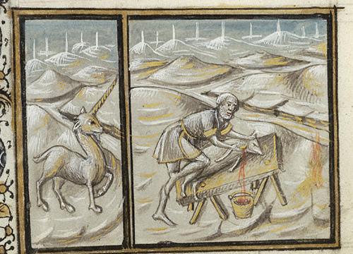 Los Unicornios. Monoceros_monocerus_unicornio
