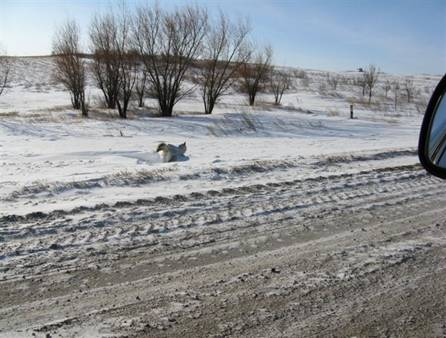 [Imagen: congelado_nieve.jpg]