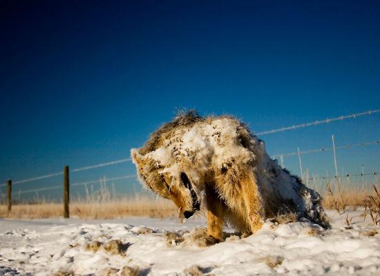 Clima salvaje. Animales petrificados por el frío