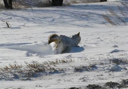 [Imagen: muerto_congelado_nieve.jpg]
