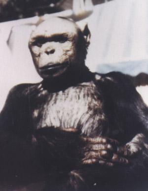 Oliver, el chimpancé que quería ser humano