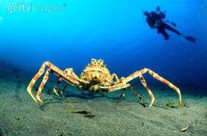 El ejercito de los cangrejos gigantes
