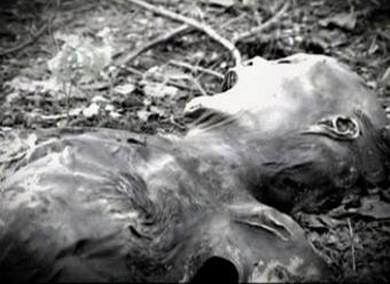 Lugares tétricos. Las granjas de cadáveres de Estados Unidos.