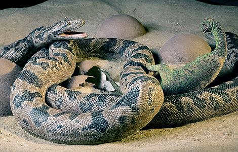 Sanajeh indicus, la serpiente que devoraba bebés de dinosaurio.